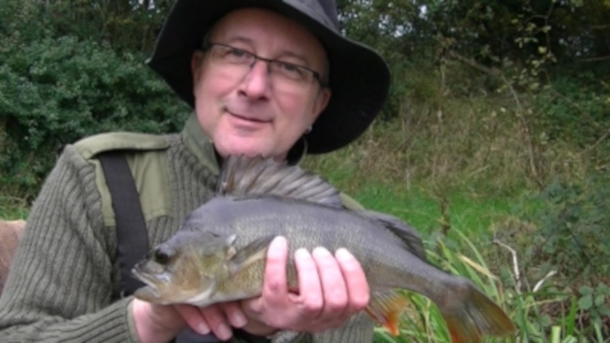 Read more about the article Perch fishing with waggler and prawn