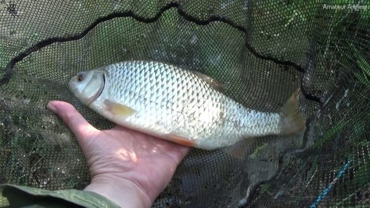 Fishing in hot weather – New lake