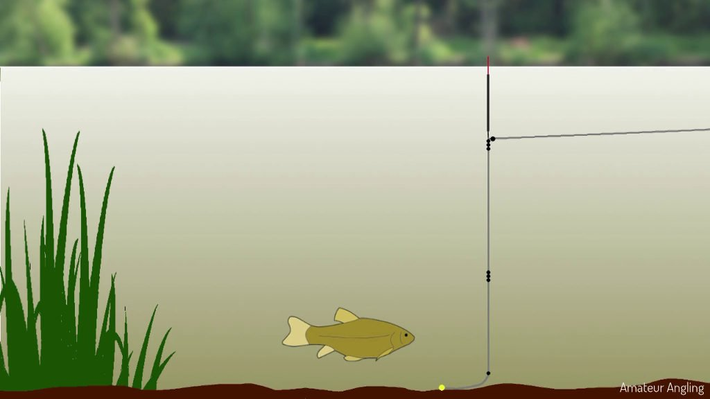 Tench fishing rig