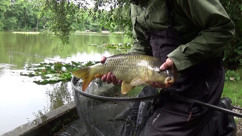 Carp short range feeder fishing